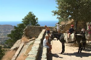 Horse riding, pony treks and donkey rides