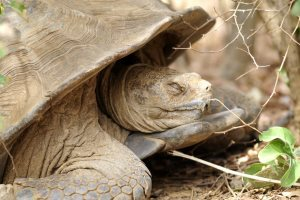 Tortoise Sanctuaries