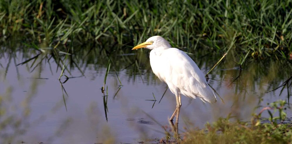 A wide variety of birdlife can be discovered in The Gambia