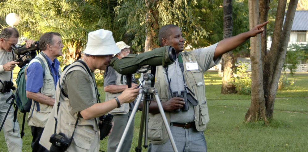 Birdwatching in the Senegambia gardens