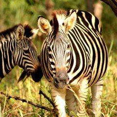 Fathala Wildlife Reserve Animals