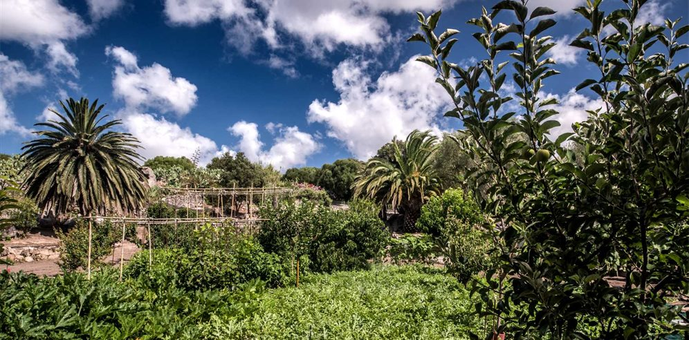 Vegetable Gardens- Villa del Golfo Lifestyle Resort