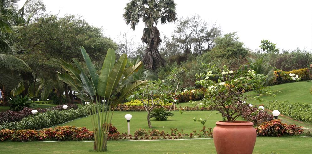 Lush grounds at Chalston Beach Resort, Calangute, North Goa
