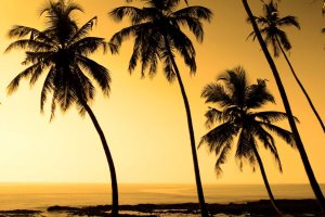 A Goan beach at sunset - Jool-yan