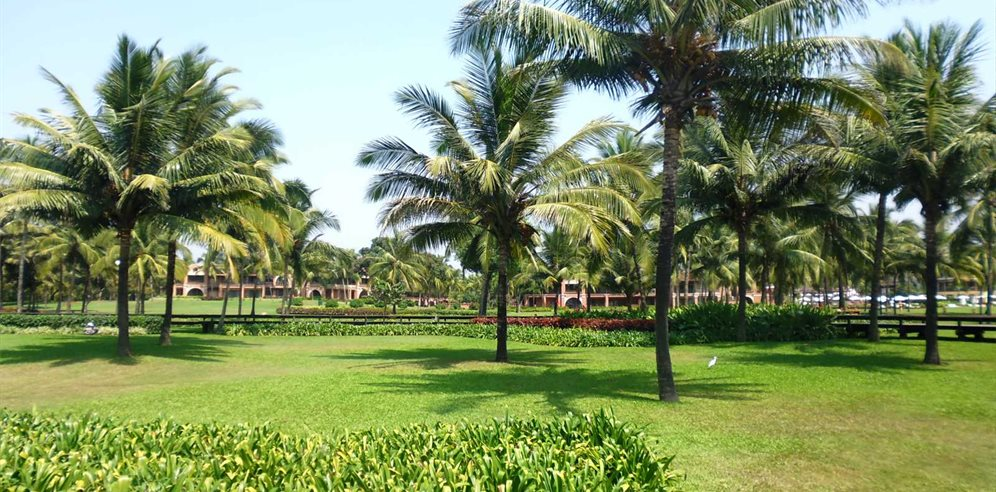 Lush Grounds at the Park Hyatt Goa Resort & Spa, Arossim, South Goa
