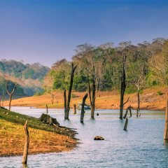 Touristic boat on the lake in the Periyar National Park, India - aaabbbccc | Shutterstock