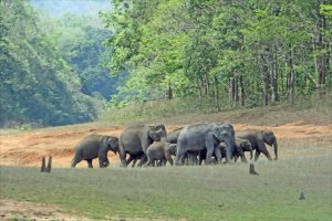 Herd of elephants in Periyar Wildlife Reserve, Kerala  - Jean-Pierre Dalbéra | Flickr creative commons