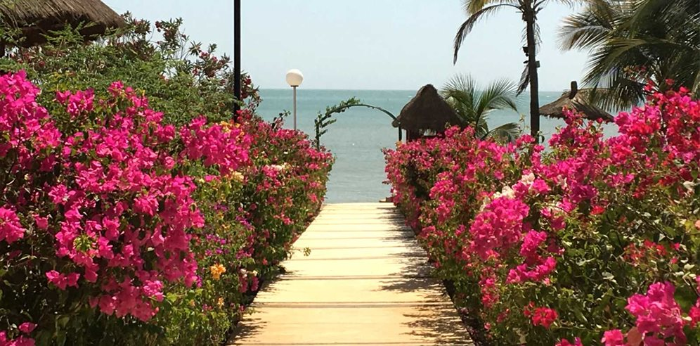 Tropical flowers at Hotel Royam in Saly, Senegal