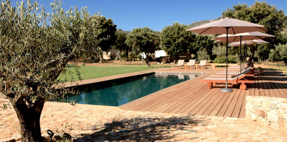 Résidence grounds, with shared pool and olive trees - Casa Legna - La Balagne