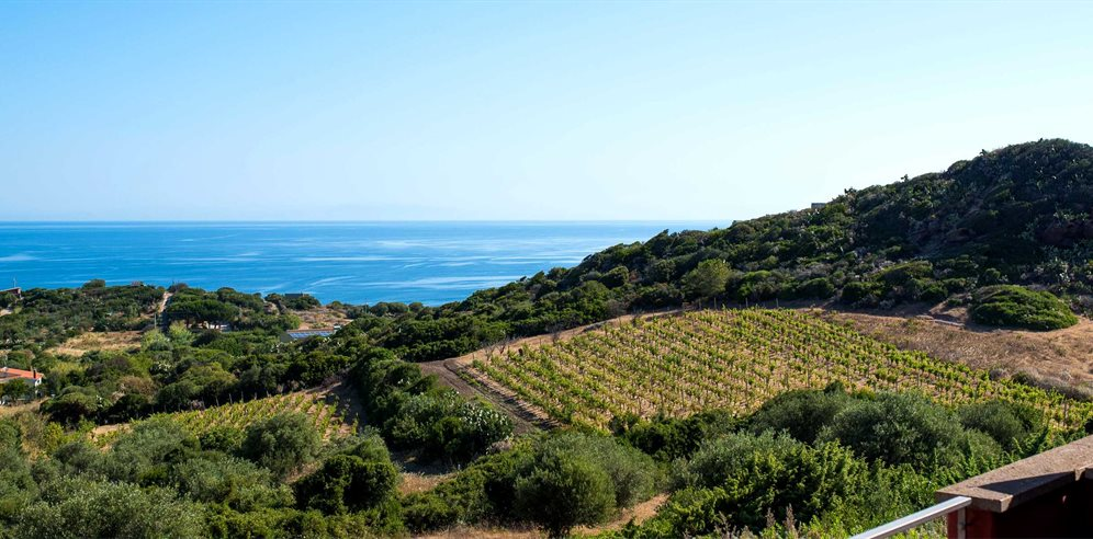 View over the Vineyard - Hotel Bajaloglia Resort