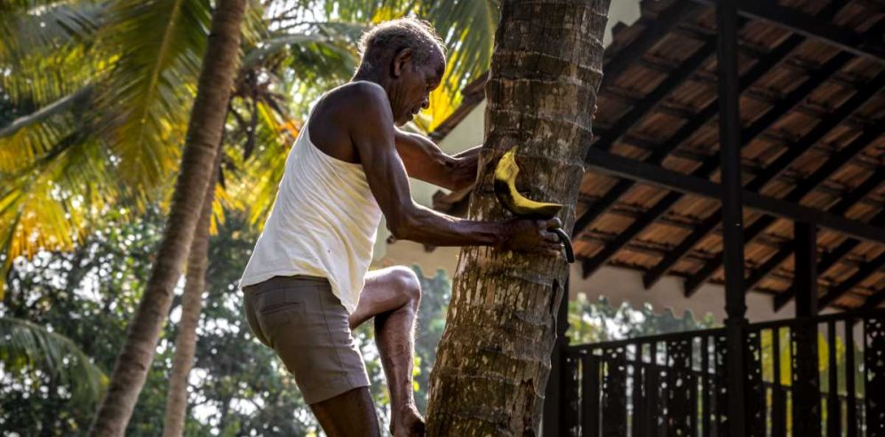 Man climbing a palm tree at The Postcard Cuelim